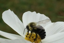 Bees Mine / by Carolyn Roberson