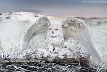 Sugar/Cake Sculptures / CIELO - Snowy Owl (Fruit Cake)
