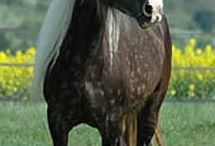 a horse, of course!
