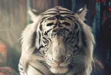 Majestic Tigers / by TF Walsh