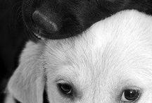 Animals ♡