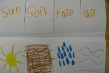 Kindergarten Plants / by Karen Mills
