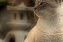 animalia / Cute and enchanting animals