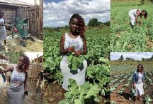 AGRICULTURE BONNE AFFAIRE