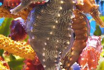Coral Reef Aquarium / Dive into an underwater world / by Xcaret Park