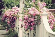 Дом, сад