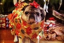 Pug lovies! / by Ann Beckman