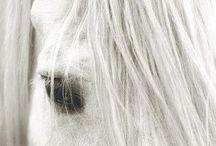 cai fRumosi