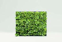 pareti verdi