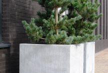 Plantenbakken / Plantenbakken maken tuinen interressan, modern en eigentijds.