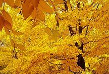 podzim priroda