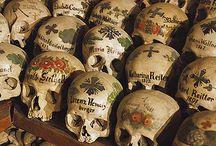 Skulls / by Maria Pena
