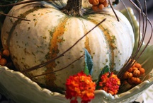 Autumn... I love you / Preciosa estación, que te embarca en la melancolía de las hojas de los arboles que caen.