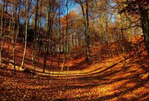 fall / fall mood