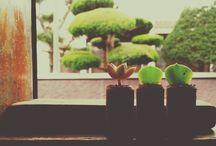 l love plants