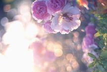 Light, Colour, Flowers