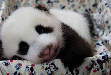 My Princess 圓仔♡ / Baby Panda 圓仔