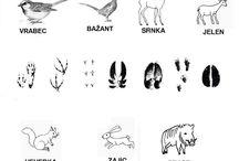 stopy zvířat