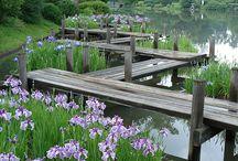 Botanické zahrady