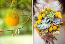 Our Actual Wedding / by Sarah Sabella