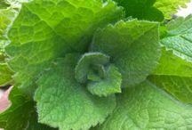 eetbare wilde planten tecepten