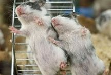American Pet Loves Hamsters, Gerbils and Mice / by American Pet Diner