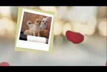 # VIDEOS / DISEÑO DE VIDEOS ORIGINALES