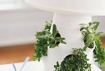 Gardening Ideas (Indoors & Out) / by Mary Miller