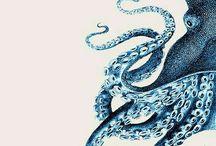 Октопус