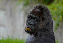 VA Photography - Dyr og Natur
