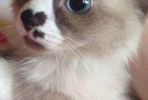 Yavru kedimm
