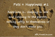 Pets = Happiness / by Dawn Miklich