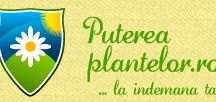 Puterea Plantelor -Plafar Online
