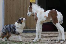 frison et chien