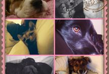 Adorable Dotty4Paws pooches / A selection of pictures from Dotty4Paws
