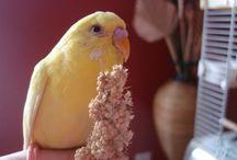 ellouises bird
