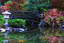 Japanese Gardens / Stunning colours!