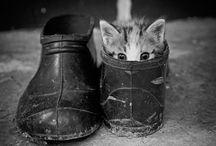 cats / by Brandilyn Haynes