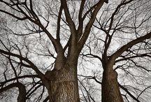 trees / by Angela Karren
