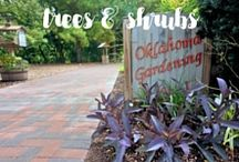 Vides | Trees & Shrubs / Here are some helpful videos from Oklahoma Gardening that cover shrubs, evergreens, forestry, planting trees, and general tree care.