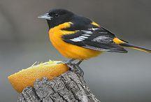 I Love Birds  / by Vicki Mains