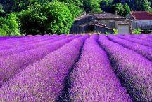 Travel Love Affair: Provence