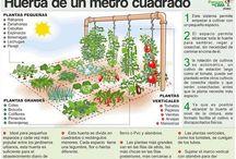 Huerto y plantas
