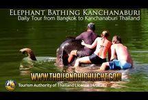 Elephant Bathing Bangkok Kanchanaburi Bangkok Day Tour / Extraordinary elephant day trip Elephant Bathing Bangkok Kanchanaburi Bangkok Day Tour