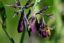 Bee Garden / by Bob Sawyer