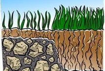 grass/ mowing