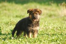 Hunde / by Serena M