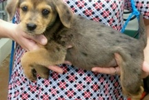 Adoptable Puppies / by Sarah B