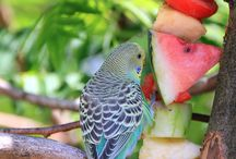 B U D G I E S <3 / Beautiful birds ❤️❣