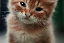 cute tings